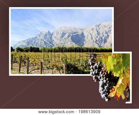 vinyard and Biokovo mountains near the Makarska riviera, Croatia in out of bounds effect
