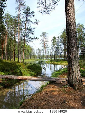 Forest lake and clear water streamlet in Finnish wilderness