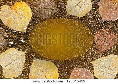Beautiful autumn background with colorful skeletoned leaves golden water droplets and frame for inscription. Concept for design for sale thanksgiving or halloween card