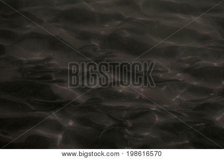 Mare, pesci, natura, vita, acqua, Mare Mediterraneo, Italia.
