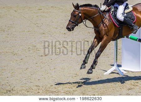 Bay dressage horse and rider uniform performing jump at show jumping competition. Equestrian sport background. Bay horse portrait during dressage competition. Copy space.