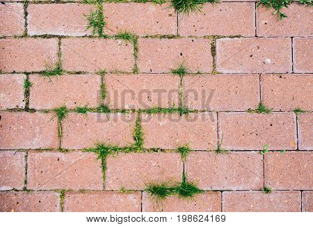 Old cobblestone background with grass like a texture