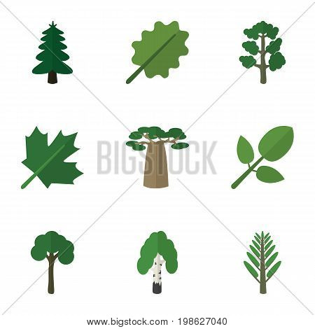Flat Icon Ecology Set Of Oaken, Park, Baobab And Other Vector Objects