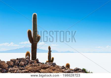 Big Cactus On Incahuasi Island, Salar De Uyuni, Bolivia