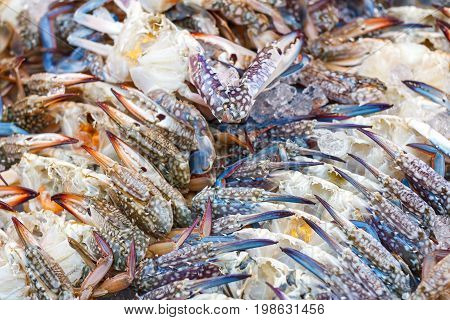 Blue swimming crab or Flower crab with ice in seafood market for cooking.