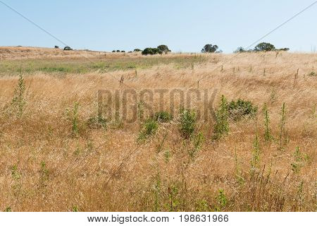 Hills Covered In Dry Grass