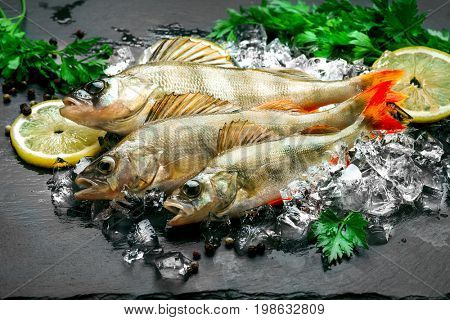 Fresh fish on ice with aromatic herbs, spices, salt. Raw perch fish on slate tray dark vintage background, top view, preparing healthy food, cooking, diet, nutrition concept