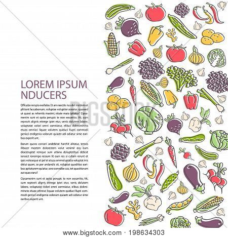 Poster template with hand drawn vegetables flat style vector. Various organic product for healthy food. Place for text