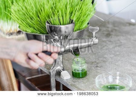 Extraction Of Wheatgrass In Action On The Kitchen Countertop Using A Manual Juicer