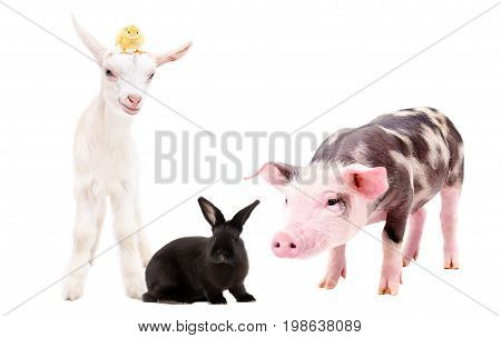 Group of funny farm animals, standing together, isolated on white background