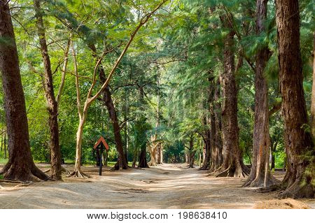 Trail At Leamsala Way To Phraya Nakorn Cave, Thailand. National Park Khao Sam Roi Yot