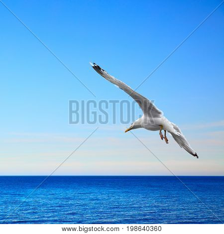 Beautiful seascape with flying seagull