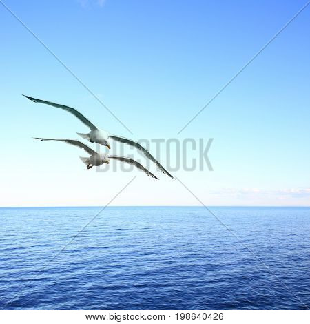 Beautiful seascape with two flying seagulls