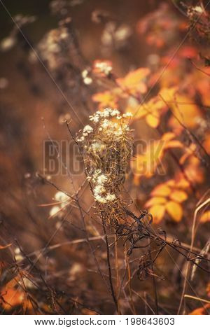 Autumn Plant Scenic on Blurred Sunny Background