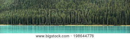 Forest panorama at lake waterfront in Banff National Park, Canada.