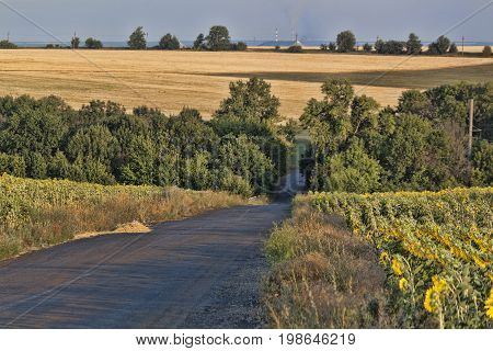 The road between the fields of sunflowers
