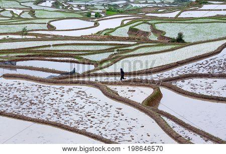 YUANYANG, CHINA - MAY 6, 2014: Hani woman working in terraced rice fields in Yuanyang county, Yunnan, China.