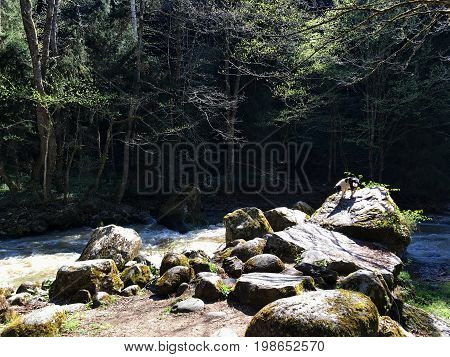 large boulders, the rocks of the river in the woods, falling rays of the sun, a small dog is on the far rock