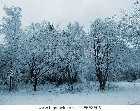 Landscape with the image of trees under snow (blue tone stylization)