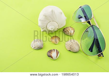 Different varieties of sea snails and glasses on a green background.