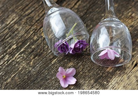 The flowers are violets. Floral background.The flower in the glass. A few small violet flowers in a transparent glass glasses. Glasses on the wooden surface.