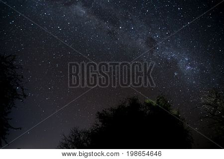 An astrophotography shot of the milky way seen from the bush veld of South Africa.