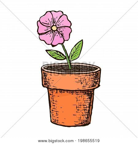 Potted flower in a pot, colorful sketch illustration. Vector