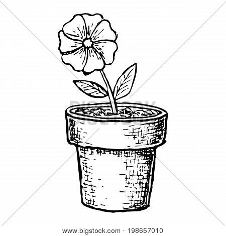 Potted flower in a pot, sketch illustration. Vector