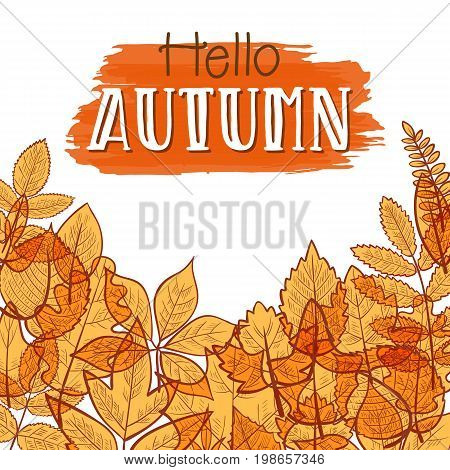 Background with colorful transparent skeleton autumn leaves, hello autumn. Vector