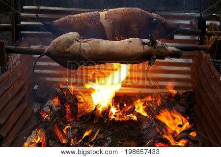 Tasty pigs traditionally prepared for dinner on a rotating spit with hot fire and coal underneath.