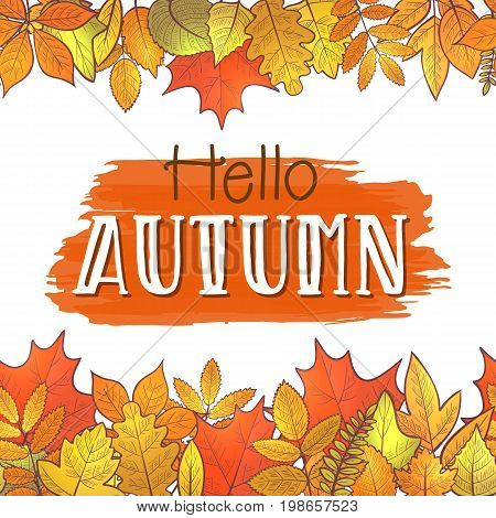 Seamless horizontal borders with colorful skeleton autumn leaves, hello autumn. Vector