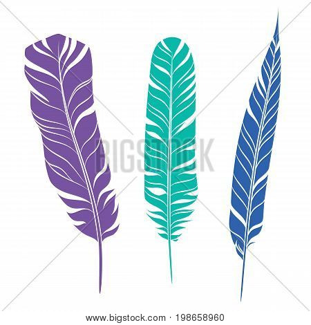Elegant feathers set isolated on white background. Element for your design, decoration and artwork. Silhouette of three plumes different colors. Violet, turquoise and blue plumelets. Vector.