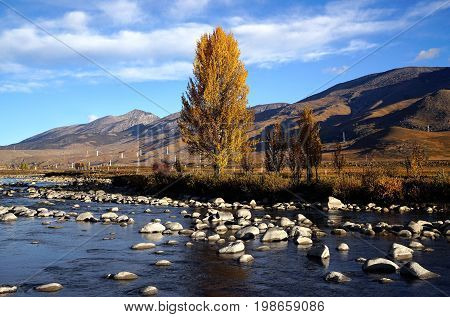 Yellow Orange Autumn Trees In The Valley Growing Beside Streaming River With Small Rocks And Hills A