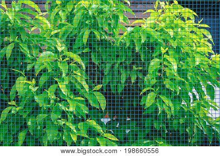 Steel wire mesh fence with green tree background