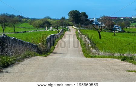 beautiful rural way between stone walls. Apulia