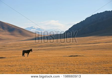 A lone horse on a background of mountains and pastures in the Tien Shan. The Issyk-Kul region Kyrgyzstan