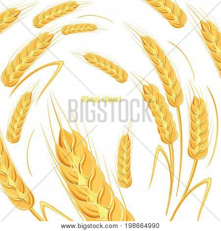 Template for bread design. Banner for beer label, cereal products. Vector illustration on white isolated background.
