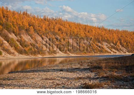 Larch taiga on the banks of Siberian rivers in the fall. Riverbed Moiyerokhan in Evenkia in September during the rafting and fishing Krasnoyarsk region Russia