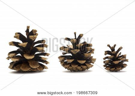 Three pine cones isolated on white background
