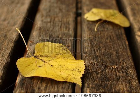 Autumn leaves on the park bench, yellow leaf