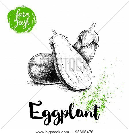 Hand drawn sketch whole eggplants with hal cut aubergine composition. Illustration isolated on white background. Farm fresh ecological vegetables artwork.