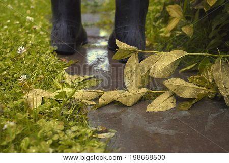 Wet footpath fallen autumn flower and human legs walking away filtered photo