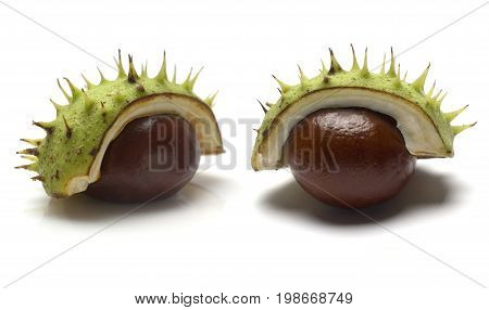 A close up of two horse chestnuts