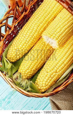 Basket of fresh sweetcorn husked. Space for text