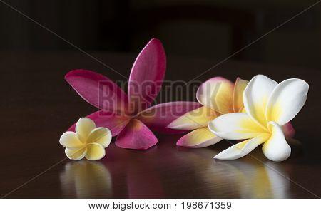 Plumeria alba and plumeria rubra flowers on the table