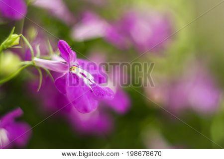 Purple Trailing Image Photo Free Trial Bigstock