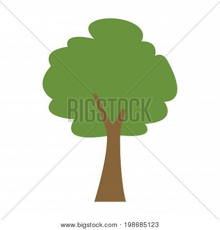 green tree forest foliage natural ecology vector illustration