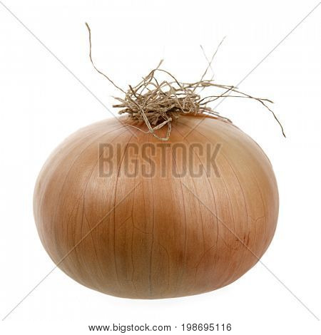 Dried onions isolated on white background.