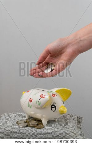 The girl throws a coin into the piggy bank. Piggy bank in the form of a painted pig. A handful of coins.