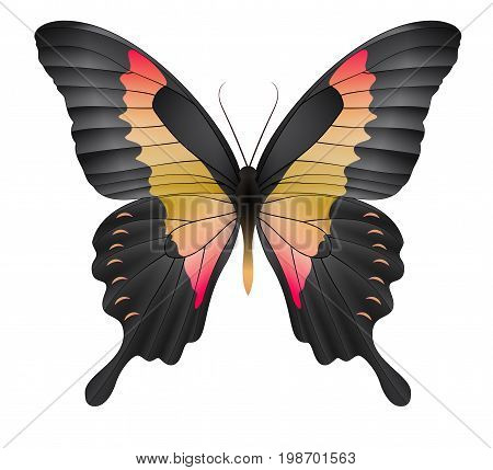 Beautiful butterfly isolated on a white background. Papilio phorcas apple-green swallowtai butterfly. 3D illustration